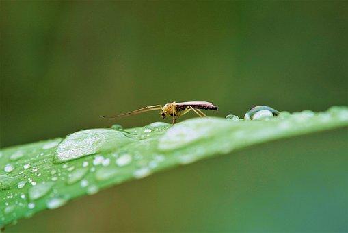 Larva, Butterfly, Green, Nature, Summer, Grass