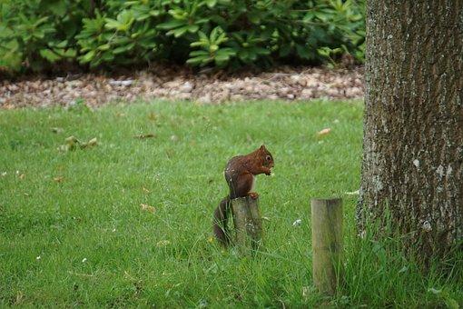 Squirrel, Cute, Park, Eat, Animal, Nature, Red Squirrel