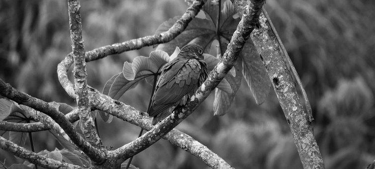 Black And White, Ave, Parrot, Bird, Colombia