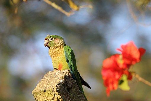 Parrot, Bird, Fauna, Exotic, Nature, Wild