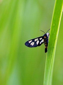 Moth, Green, Rain, Grass, Nture, Summer, Beautiful