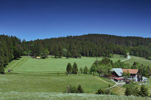 Agriculture, Farm, Landscape, Rural, Harvest, Bio