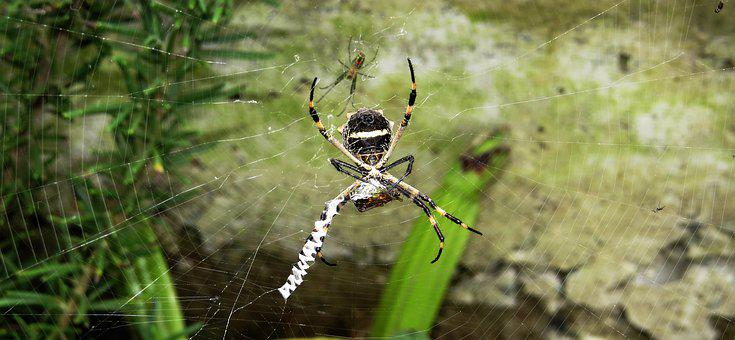 Insect, Spider, Loom, Hunter, Colombia