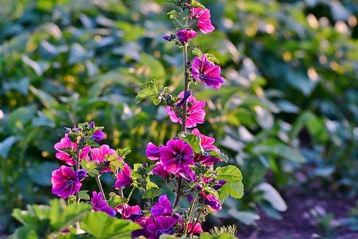 Wild Flowers, Flower, Nature, Flora, Summer, Flowering
