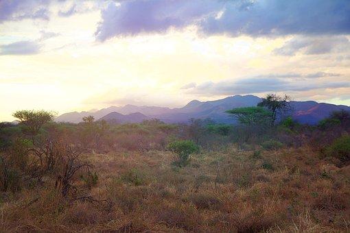 Africa, Tsavo, Kenya, Safari, National Park