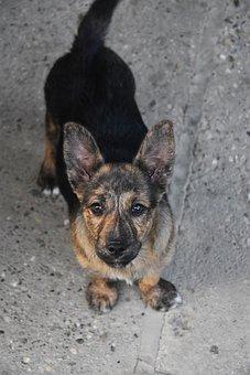 Dog, Pet, Puppy, Animal, Friendship, Cute, Domestic