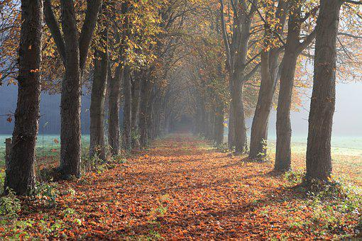 Autumn, Avenue, Away, Nature, Forest, Trees, Path