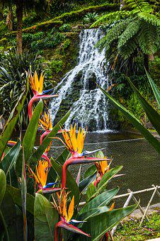 Strelizie, Parrot Flower, Waterfall, Azores, Exotic