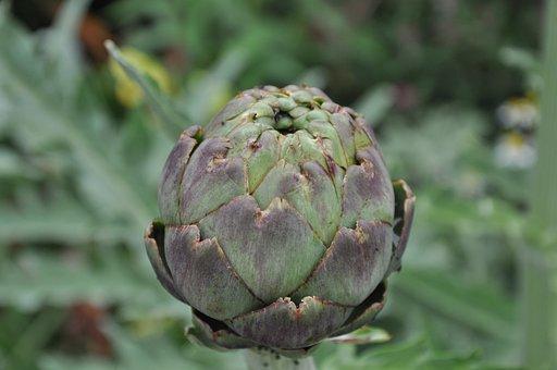 Bud, Flower, Garden, Beauty, Macro, Close Up