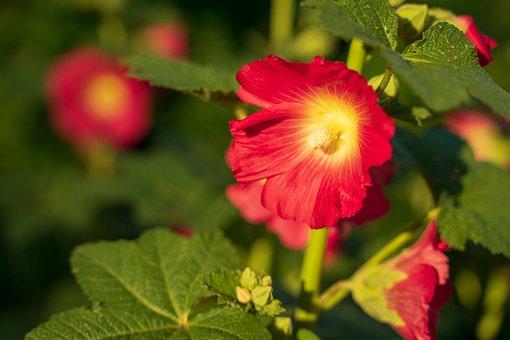 Flower, Wild Flower, Nature, Plant, Blossom, Bloom