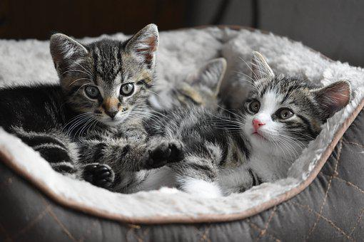 Cat, Kittens, Small, Pet, Kitten, Cute, Charming, Sweet
