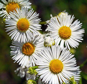 Wild Flowers, Roadside, Plant, Close Up, Flora, Summer