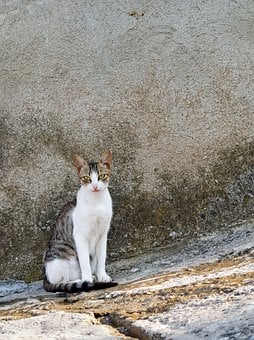 Greek Street Cat On Stone Stairs, Greek Islands