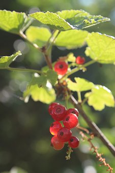 Berry, Red, Vitamins, Close Up, Nutrition, Healthy