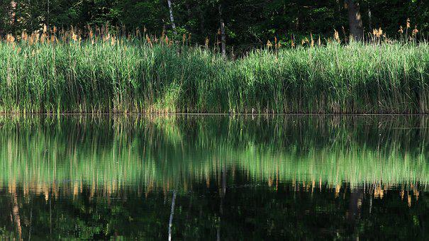 Lake, Reed, Bank, Mirroring, Mood, Waters, Rest
