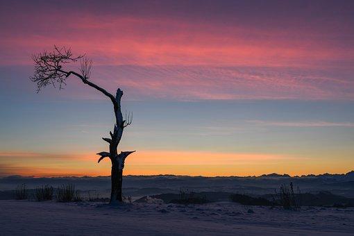 Morgenstimmung, Tree, Winter, Landscape, Dawn, Mood