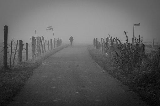 Fog, Away, Mystical, Nature, Landscape, Forest, Mood
