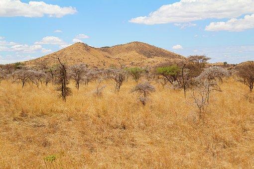 Africa, Kenya, Safari, Nature, Animal World, Wild