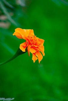Flowers, Yellow Flower, Yellow, Bright, Nature