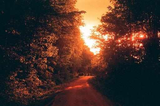 Trail, Light, Sun, Nature, Trees, Wood, Film, Analog