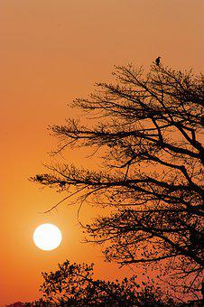 Sun, Bird, Sunset, Nature, Sky, Orange, Clouds, Tree