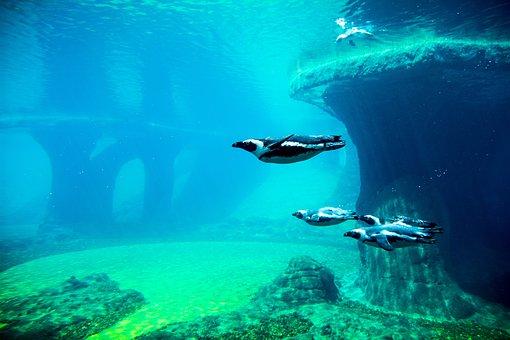 Penguins, Aquarium, Water, Penguin, Diving, Wrocław
