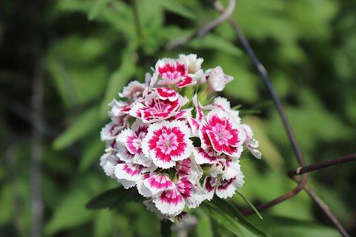 Flower, White, Spring, Plant, Nature, Summer, Garden