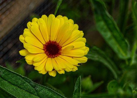 Flower, Yellow, Orange, Summer, Nature, Blossom, Bloom