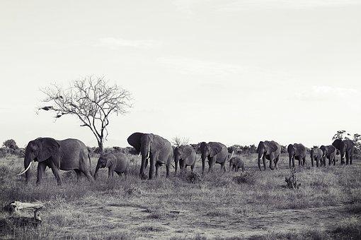 Africa, Kenya, Tsavo, Safari, Nature, Animal World