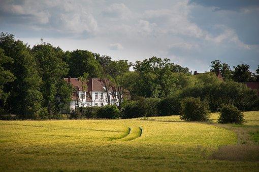 Cornfield, Landscape, Agriculture, Field, Nature