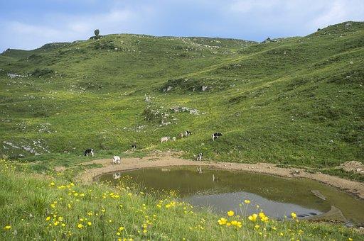 Pasture, Green, Nature, Prato, Landscape, Agriculture