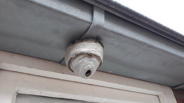 Wasp, Nest, There, Bug, Fauna, Build, Paper, Larf