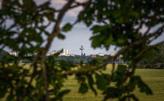 Cornfield, Landscape, Agriculture, Field, Summer