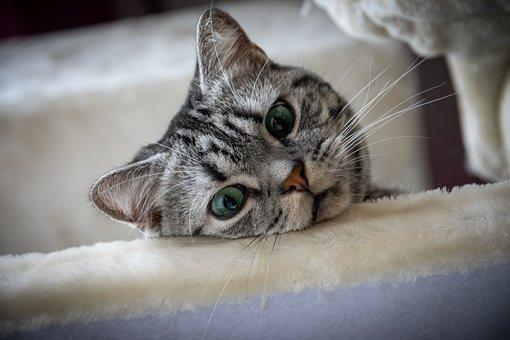 Kitten, Cat, Sweet, Cute, Charming, Domestic Cat, Pet