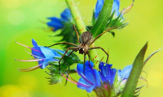 Darownik Wonderful, Arachnid, Szczękoczułki, Female
