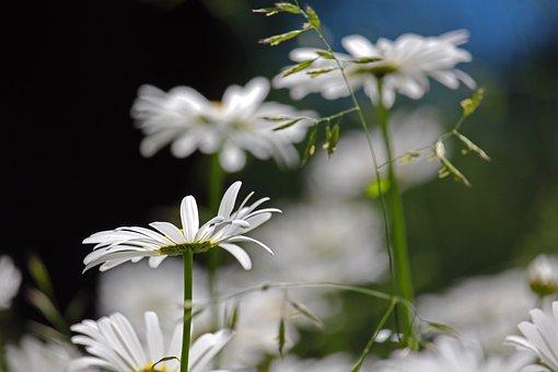 Margin Rides, Flower Meadow, Garden, Meadow, Flowers