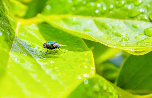 Fly, Outside, Leaf, Green, Water, Droplets, Bright