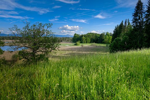 Foothills Of The, Grass, Meadow, Hill, Nature, Rural