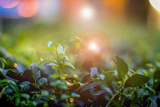 Bud, Plant, Blossom, Nature, Garden, Gardening, Summer