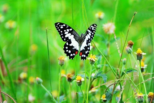 Butterfly, Flower, Grass, Green, Garden, Fly, Poultry