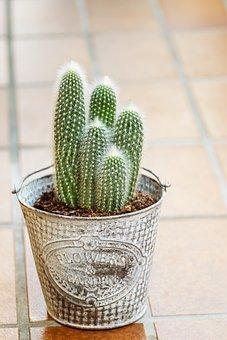 Cactus, Houseplant, Plant, Green, Pot, Flowerpot