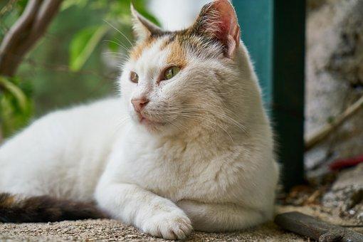 Cat, White, Portrait, Mustache, Kitty, Eyes, Nose
