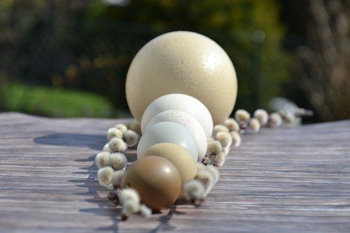 Ostrich Egg, Goose Egg, Putenei, Hen's Egg, Grünlegerei