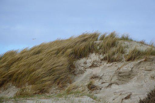 Spo, Dune, Schleswig, Recovery, Sand, Beach, Surf