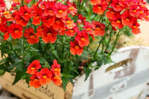 Elves Porn, Terrace Flower, Summer, Balcony Plant