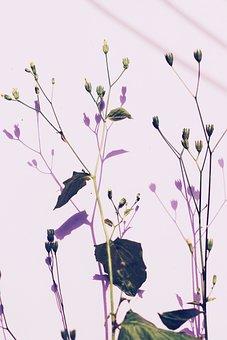 Spring, Summer, Garden, Garden Flowers, Wild Flower