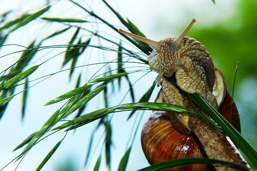 Winniczek, Molluscum, Kłos, Blade Of Grass, Forest