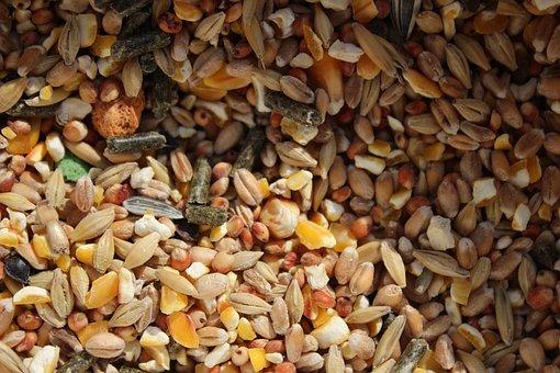 Grains, Food, Texture, Cereals, Grain, Agriculture