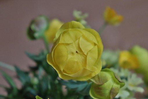 Nature, Wild, Yello Flower, Wildflower, Background