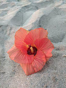 Flower, Red, Sand, Beach, Coast
